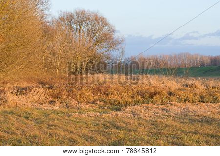 Orange Colored Floodplain Forest
