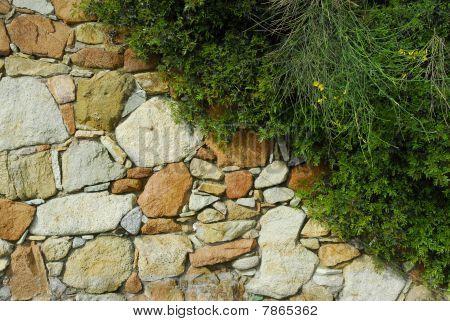 stone wall in garden
