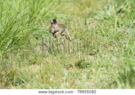 Rapid Rabbit