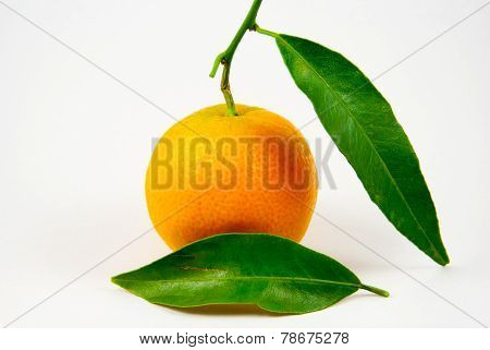 Tangerine, Mandarin, Clementine Isolated On White