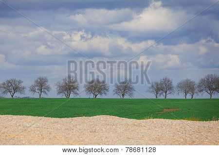 spring landscape with the trees