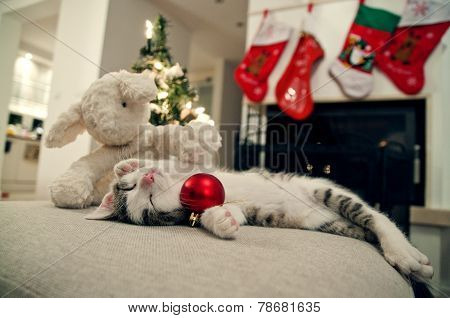 Merry Christmas cat. Kitten under tree, with sheep toy. Santa