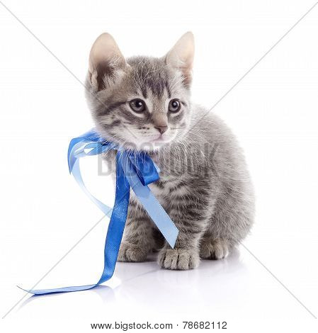 Lovely Gray Kitten With A Tape.