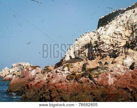 Birds And Sea Lions Ballestas
