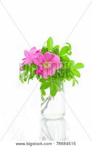 Beautiful pink Eglantine in jar on white background
