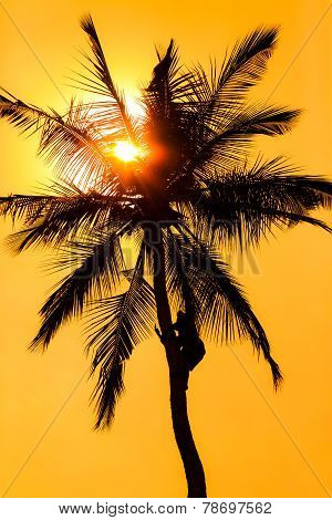 Orange Glow Sunset With A Palm Tree Silhouette