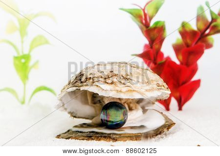 Black Pearl Inside Oyster Underwater