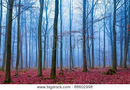 Enchanted Forest In Fog In Blue And Pink