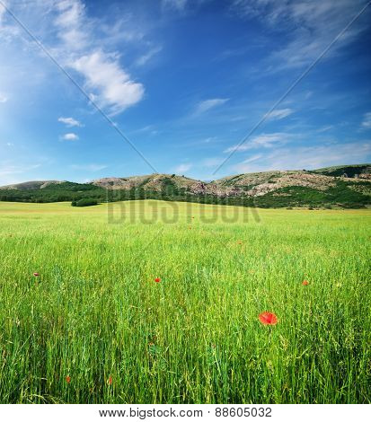 Beautiful meadow landscape. Composition of nature.