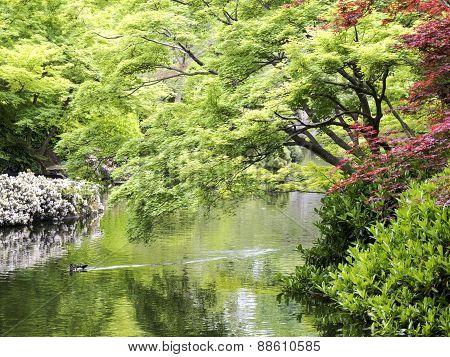 Spring In Japanese Garden