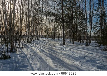 Deciduous-coniferous Forest In Early Spring.