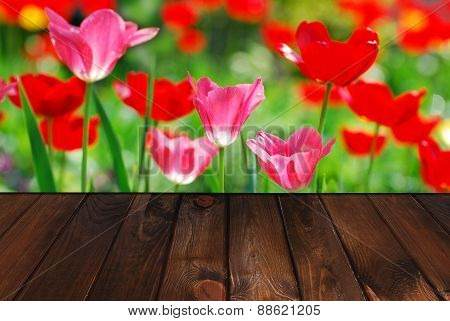 Wooden Floor And Spring Garden With Tulips