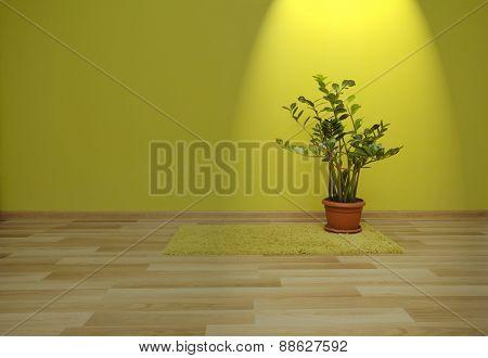 Plant in green room in spotlight
