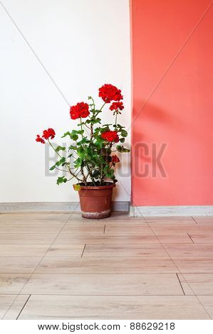 Flower pot in empty room with red wall