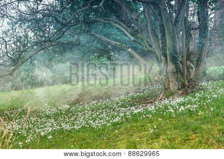 Spring landscape. Snowdrops in the meadow.