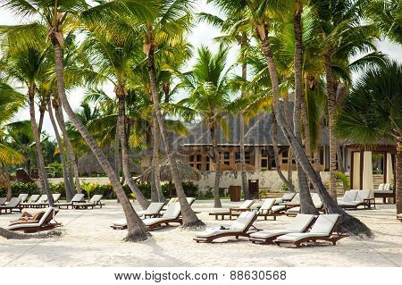 Palm trees on the Wild tropical caribbean sand beach in Dominican republic. tranquil resort. Caribbe