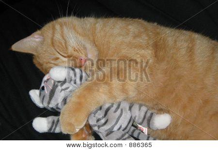 Cat Nappin