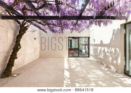 architecture, modern house, beautiful veranda with wisteria