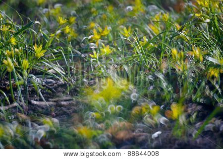 Yellow Flowers In Green Summer Grass
