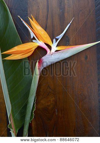 Bird Of Paradise Flower On Wood Background.