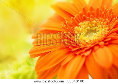 Orange gerbera close-up with yellow background. Intentionally shot with extremely shallow depth of field.