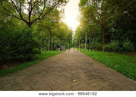 walkway in a beautiful Park