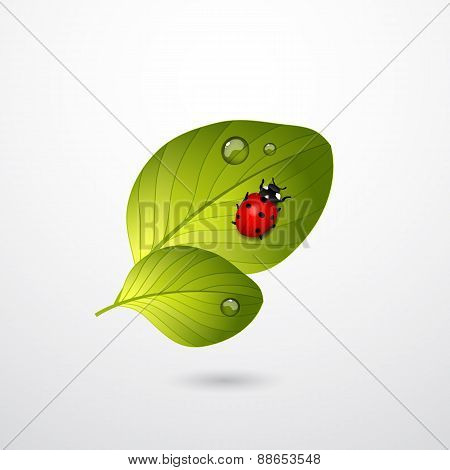 Two green leaves with red lady bug.