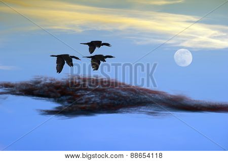 Birds Flying Couds And Moon Sunset