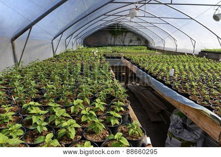 Plant Saplings In A Greenhouse