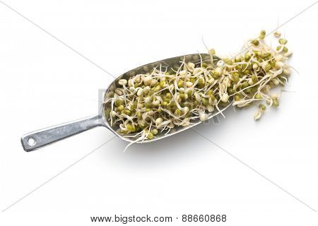 Sprouted mung beans on metal scoop