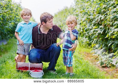 Father And Two Little Boys On Organic Raspberry Farm