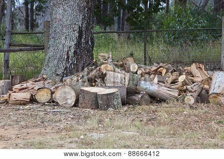 Woodpile of oak lumber