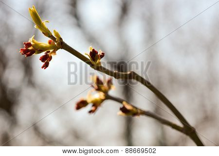 Blooming Branch With Blurred Background