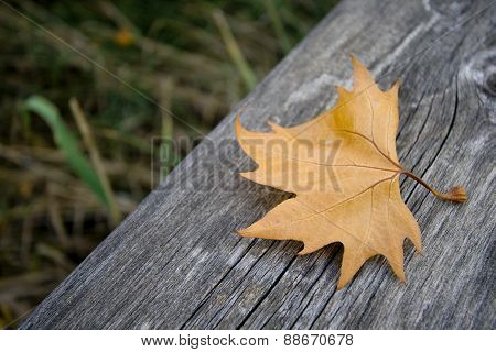autumn leaf on wood