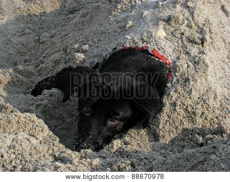 Dog buried in the sand