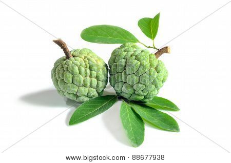 Fresh Custard Apple On White Background