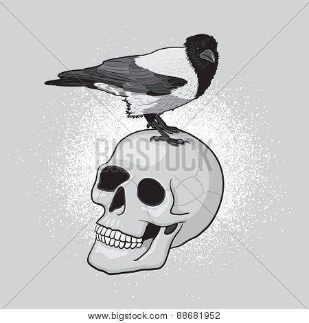 Crow Bird on the Human Skull
