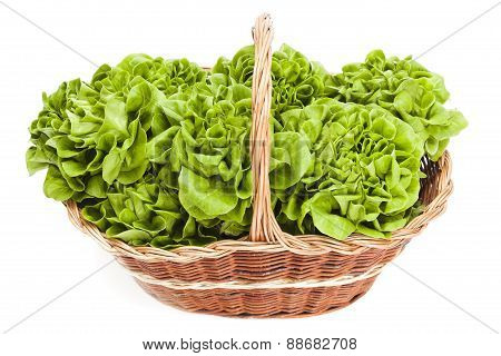 Lettuces On A White Background