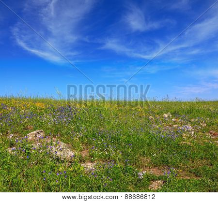 Picturesque carpet of spring flowers and fresh grass. Israel. The blossoming Golan heights in a fine sunny day
