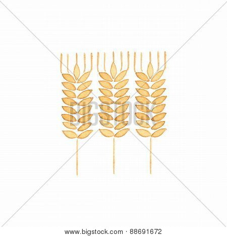 Watercolor ear of wheat on the white background, aquarelle. Vector illustration.