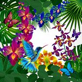 stock photo of colibri  - Floral design background - JPG