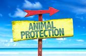 picture of animal cruelty  - Animal Protection sign with beach background - JPG