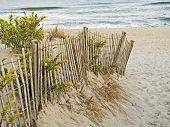 picture of goldenrod  - a fence sand dunes and goldenrod along the new jersey shore - JPG