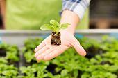 stock photo of greenhouse  - people - JPG