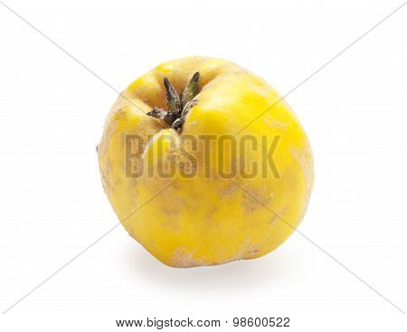 quince fruit on white background