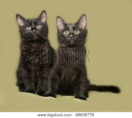 Two Black Fluffy Kitten Sits On Green