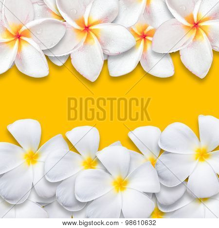 Frangipani Flower Isolated On Yellow Backgound