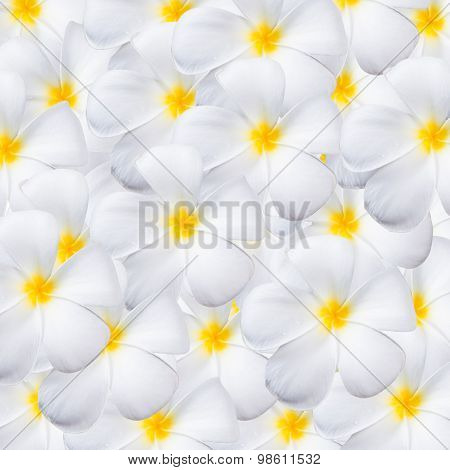 Frangipani Flower, Design For Background