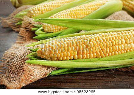 Fresh corn on cobs on sackcloth, closeup