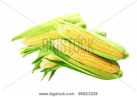 Fresh corn on cobs isolated on white